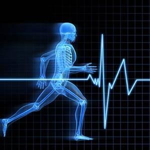مدوّنات الجانب الصحي والبدني