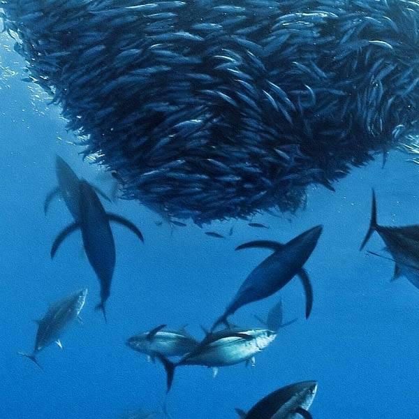 مملكة المحيط