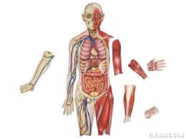 علم التشريح (1) - Anatomy