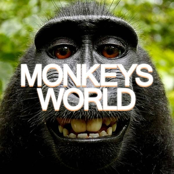 عالم القرود - MONKEYS WORLD