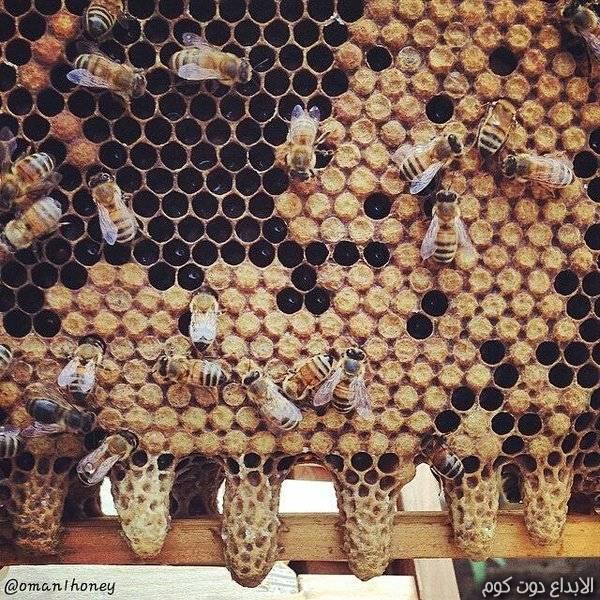 مملكة نحل العسل