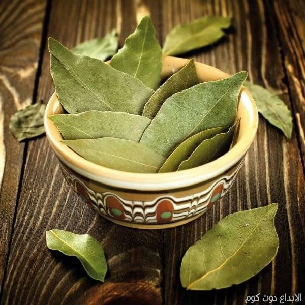 مقال: فوائد ورق الغار  للصحة و الشعر و البشرة | العلاج بالأعشاب الطبيعية