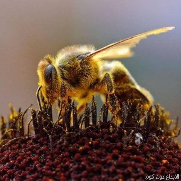 مقال: 10 حقائق مذهلة عن النحل | منتجات النحل