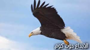 "ط¹ط§ظ""ظ… ط§ظ""ظ†ط³ظˆط±"