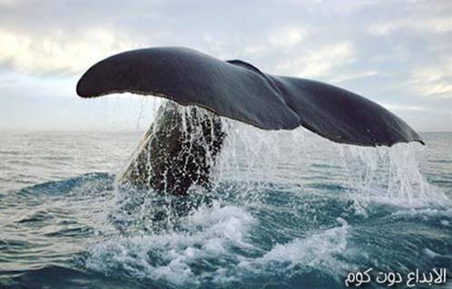 عالم الحيتان