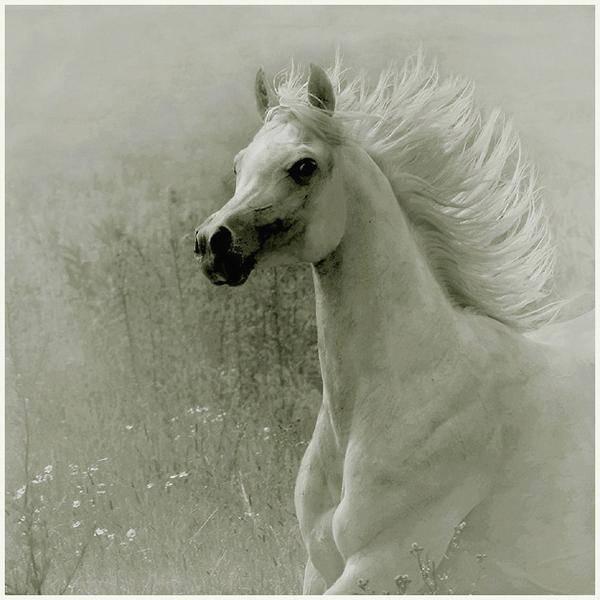 وثائقي - الحصان العربي