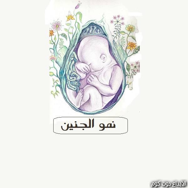 نمو الجنين