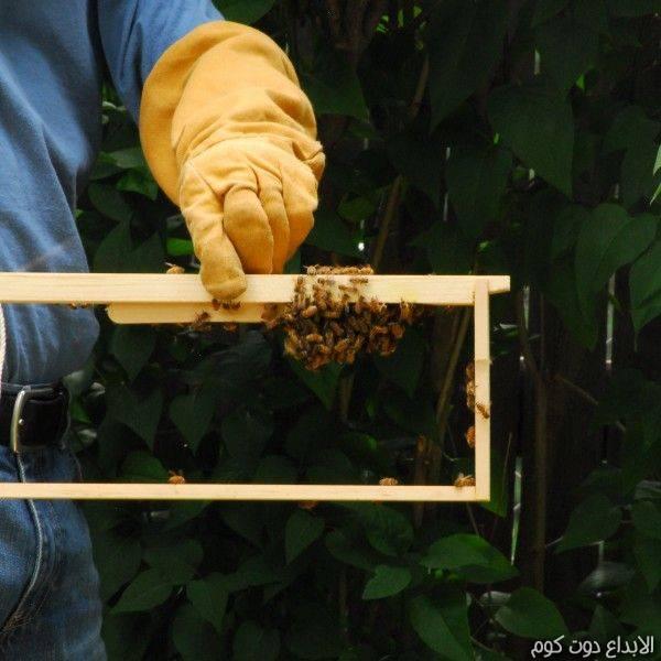 تصنيع خلية النحل