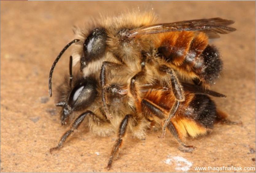 النحل- ثقف نفسك 5