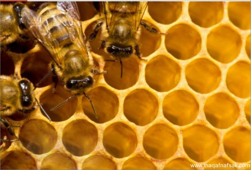 النحل- ثقف نفسك 8