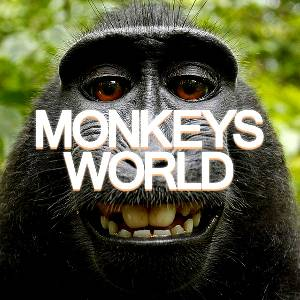"ط¹ط§ظ""ظ… ط§ظ""ظ'ط±ظˆط¯ - MONKEYS WORLD"