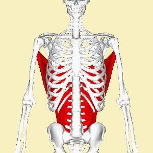علم التشريح  (Anatomy - (2